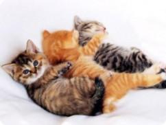 Madrileños, gatos y gatas
